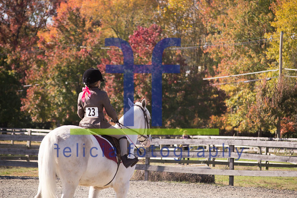 Seaton Hackney Stables Fall Schooling Show 2013