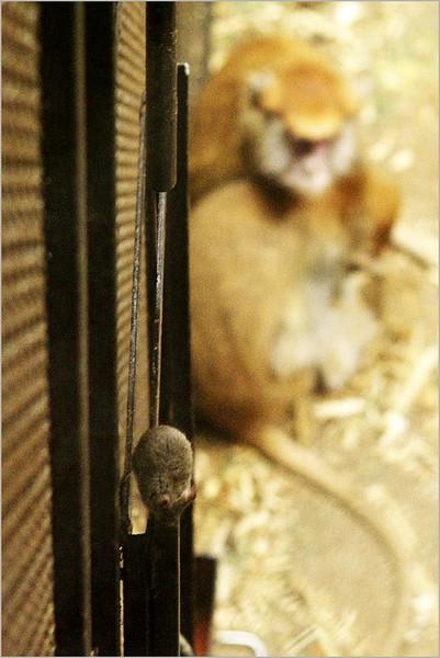 Akrobatická myš