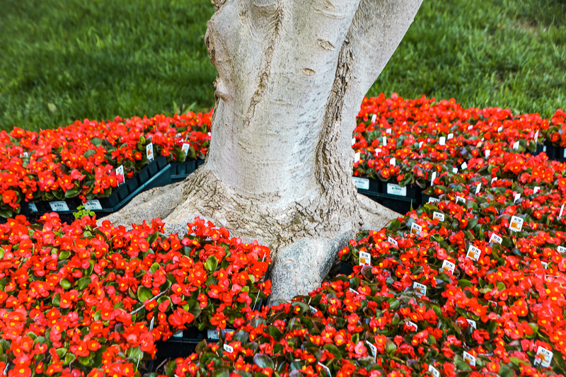 May 11 - Flower-studded tree trunk.jpg