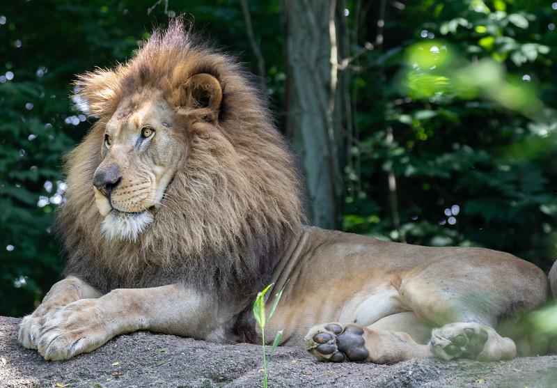 Pittsburgh Zoo-7145.jpg