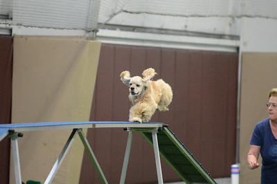 Princeton Dog Training Club AKC Agility Trial September 12-13