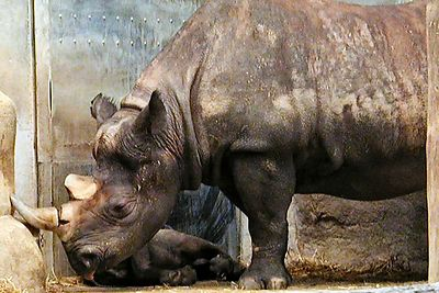 Brookfield Zoo, October 19, 2003