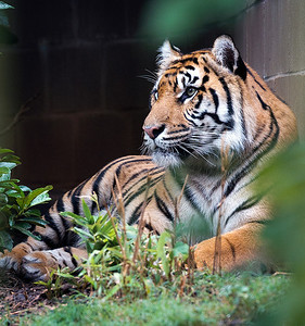Zoo Atlanta - 8/19/2012