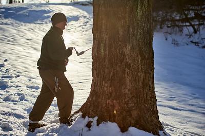 February - Maple Sugaring