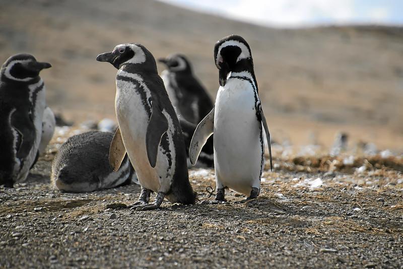 Penguin_Colony_077.jpg