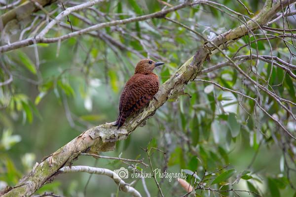 2018-01-05 Birding @ Pasir Ris Park