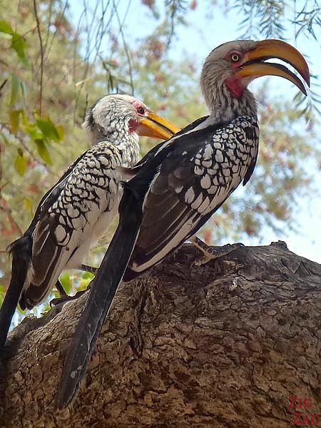 Colorful birds in Damaraland