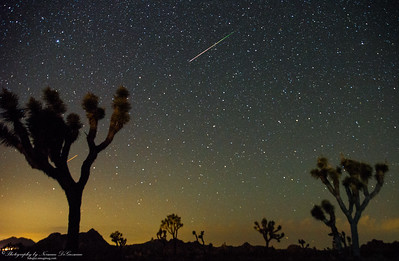 Perseid Meteor Shower at Joshua Tree