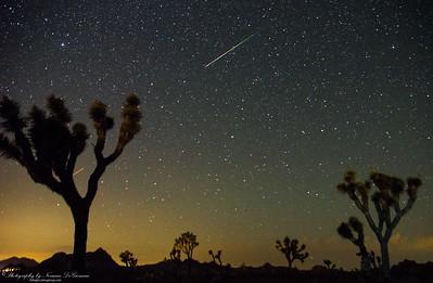 Perseid Meteor Shower at Joshua Tree