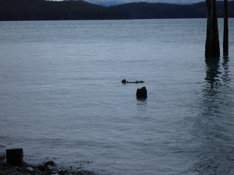 Alaska 2008 064.jpg