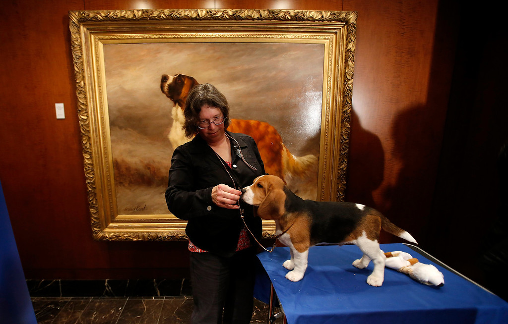 . Mary Cummings poses for photographers with her beagle, Shiloh, during the American Kennel Club\'s announcement of 2012 Most Popular Dogs in the United States. Beagles are No. 4 on the list. (REUTERS/Carlo Allegri)