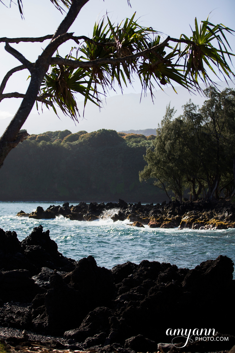 hawaii_amyannphoto_30