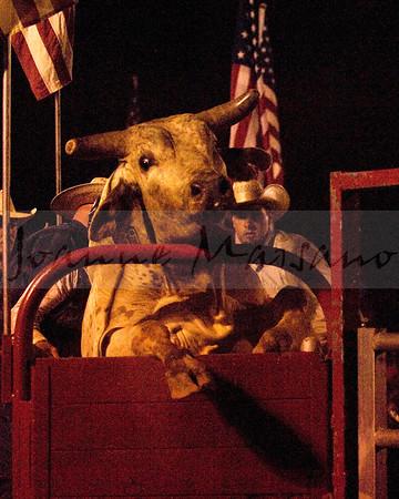 Bull Riding at Clarke Co Fair