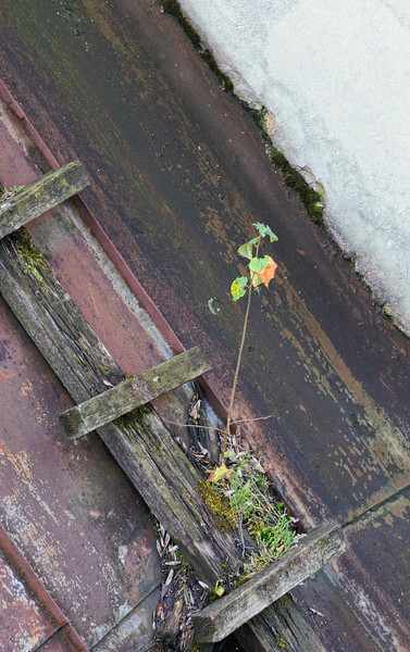 Lindeijer_2012-09-21_095036.jpg