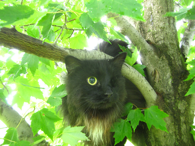 Quit taking pictures and get me out of this tree!