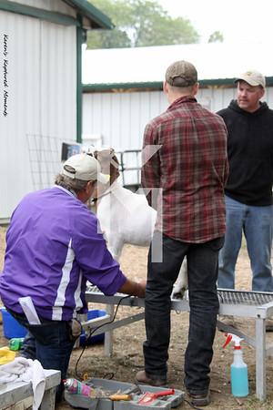 2012 DeKalb County Fair - Meat Goats