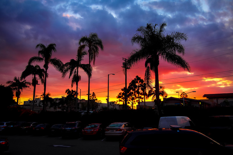 October 5 - Palm trees at sunset.jpg
