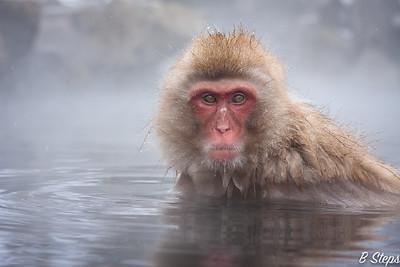 Relook of Snow Monkeys in Japan