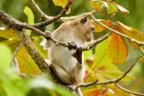 Monkey Mountain Park in Satun