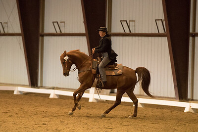 Horse 640