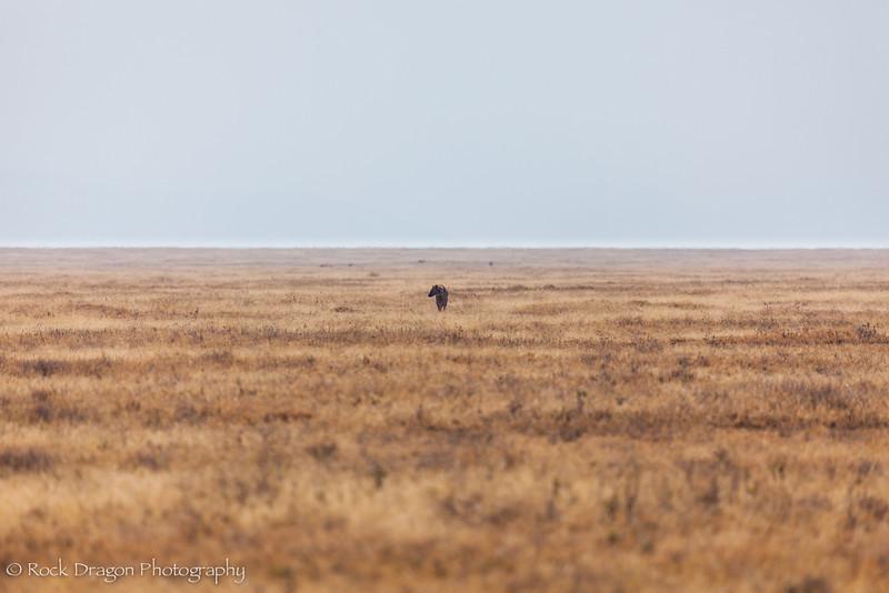 South_Serengeti-12.jpg