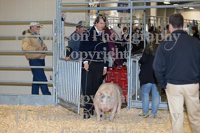 2018 KISD Swine Show Class 5