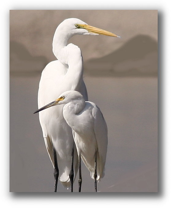 EGRET AND SON