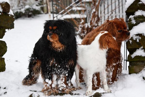 winter fun 2010