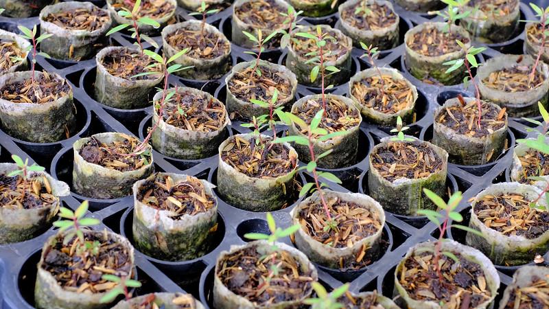 Seedlings-DSCF0450.jpg