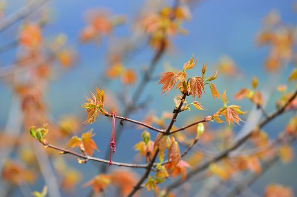 Seasons of Canaan Valley, WV