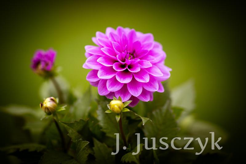 Jusczyk2021-9938.jpg