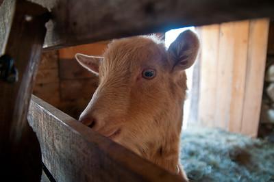 Evening Song Farm 2012