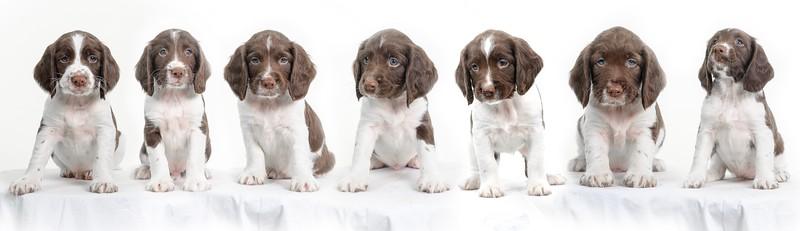 puppies test.jpg