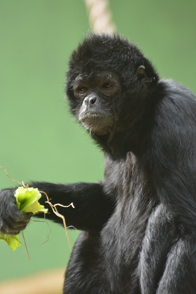 20180624 Antwerpen Zoo GVW_9316.JPG