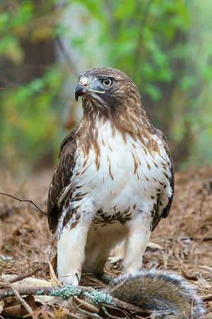 20200330 Hawk