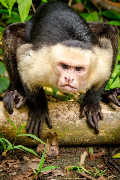 20131120_monkey_4.jpg