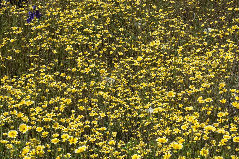 Edgewood_Park_wildflowers-05.jpg