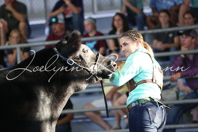 Steer Show Ringshots