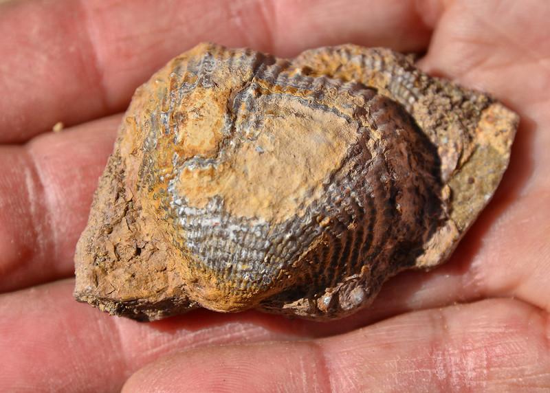 NEA_0369-7x5-Fossil.jpg
