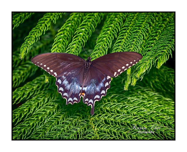 sm Brown Butterfly 4.jpg