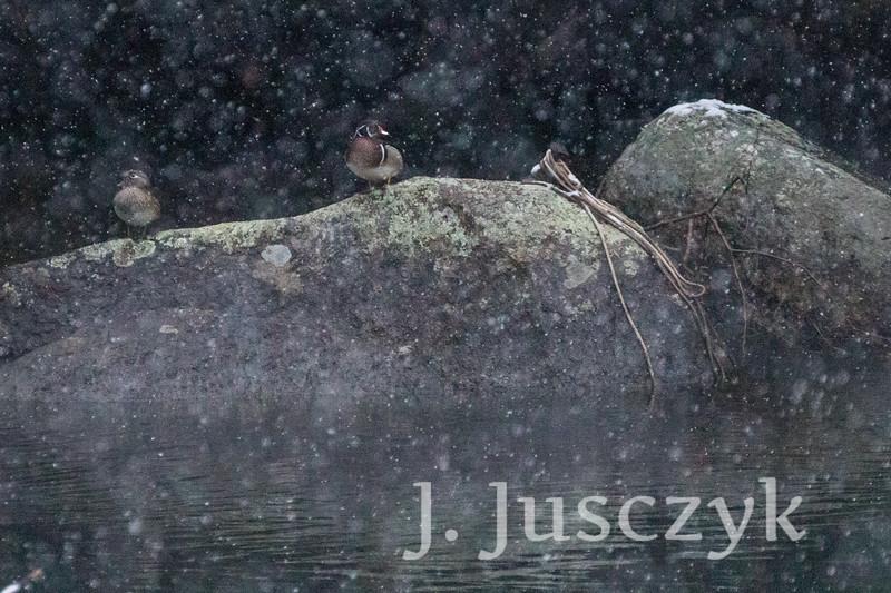 Jusczyk2021-6028.jpg