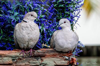 Bird Box 2021