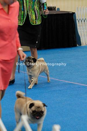 Veteran Sweepstakes Dogs 7-9 years