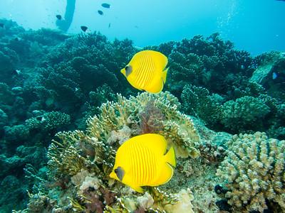 20130601 Dive, Abu Nuhas (Carnatic)