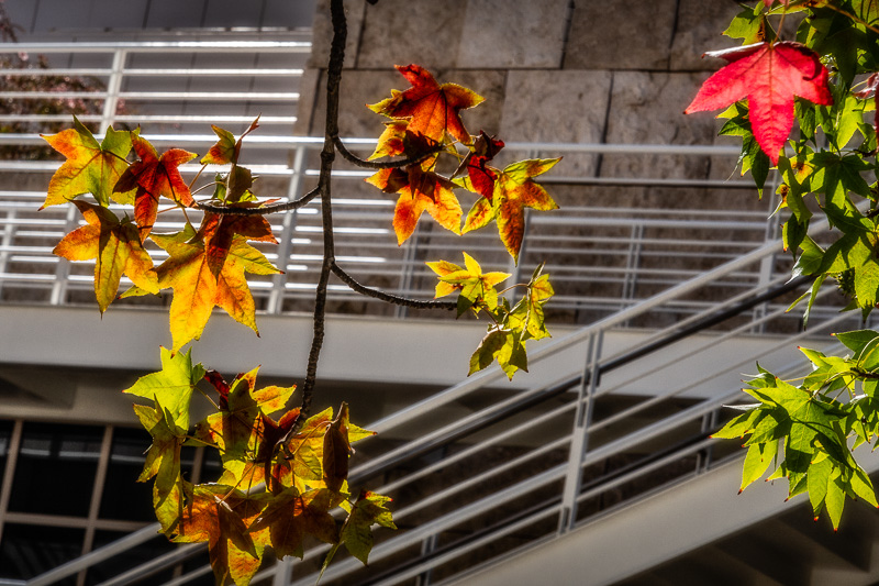 August 15 - Wow, fall is early at the Getty in Los Angeles.jpg