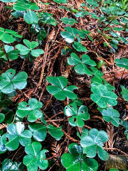 20141015_RedwoodsiPhone_0031.jpg