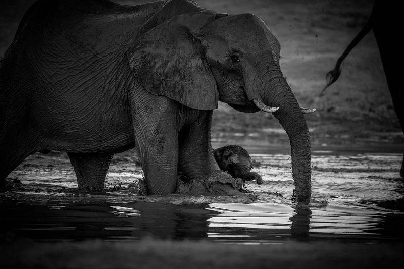 Botswana_June_2017 (4306 of 6179).jpg