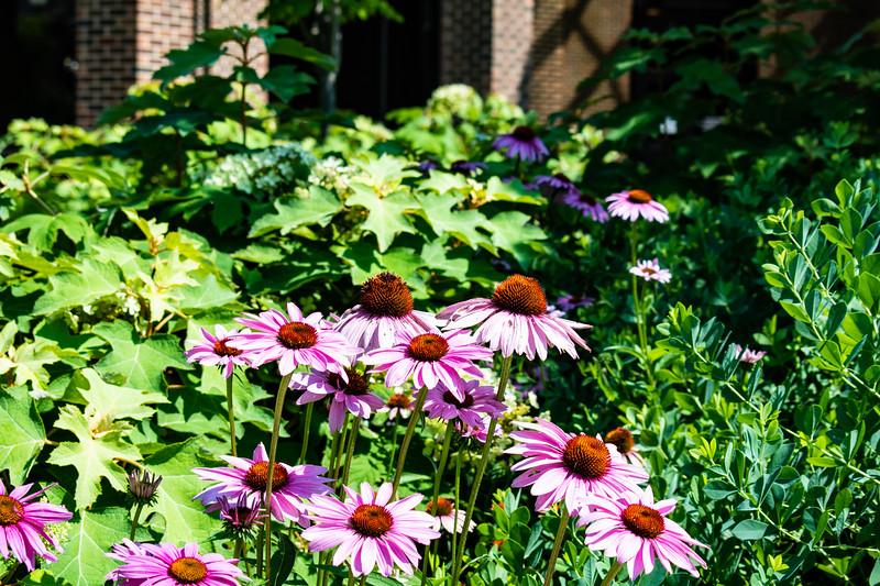 07_02_2019_Campus_Flowers_DSC_0149.jpg