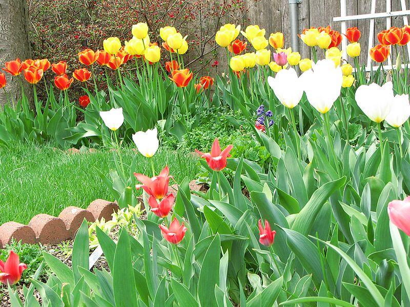 garden-2007-05-0557_std.jpg