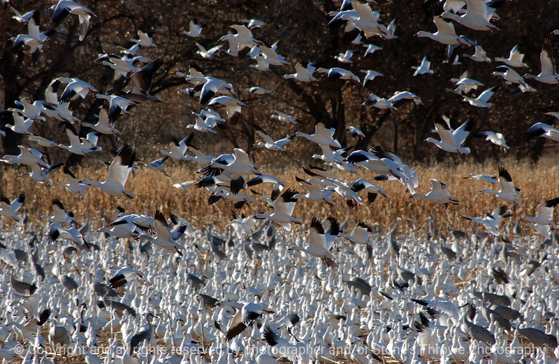 birds-bosque_del_apache_nm-01dec06-9822